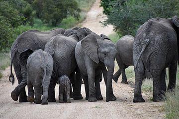 Elefantenherde mit einem Jungtier von Jeroen Lugtenburg