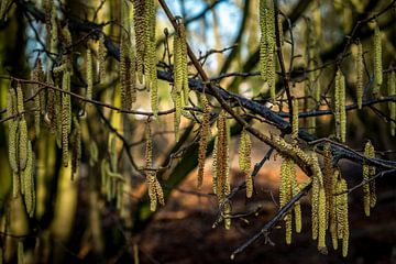 Hängende längliche Blumen am Baum von Idema Media