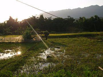 Vietnamesisches Reisfeld von Marleen Berendse