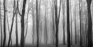 Dark Woods van