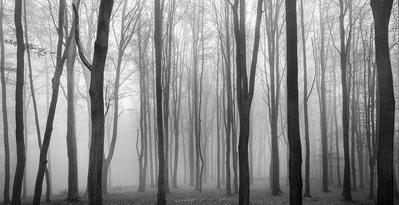 Dark Woods van Philippe Velghe