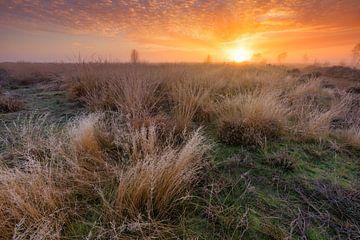 Natuurgebied Balloërveld - Drenthe, Nederland van Bas Meelker