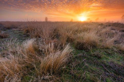 Natuurgebied Balloërveld - Drenthe, Nederland