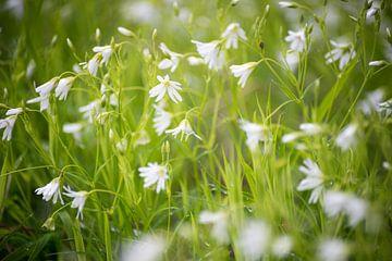 Witte bloemen in een veld van Barbara Koppe