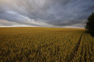 donkere wolken over het graanveld cote d'ore van wil spijker