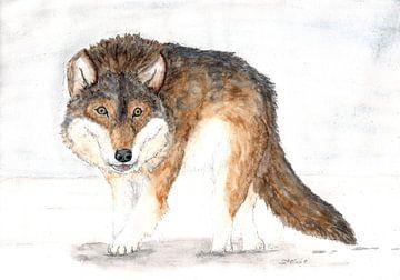 Wolf van Sandra Steinke