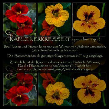 Triologie - Küchenbild Kapuzinerkresse von Christine Nöhmeier