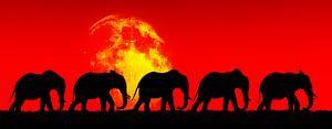 Olifanten op wandel met een volle maan op de achtergrond