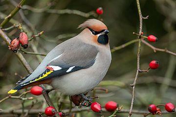 Pestvogel van Linda Raaphorst