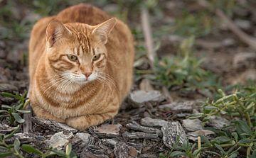 Nahaufnahme einer Katze, die auf dem Boden sitzt, mit dem Gesicht im Fokus und unscharfem Hintergrun von Mohamed Abdelrazek