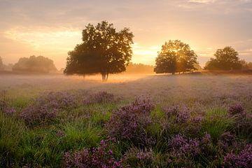 Mist bij Zonsondergang van Johan Vanbockryck