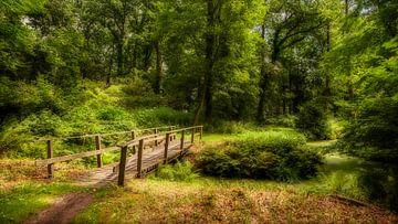 Brug in het bos van R Smallenbroek