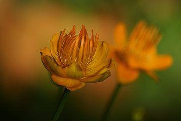 Bloemen Fantasie #23 van Lizzy Pe
