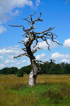 Dode boom van Folkert Jan Wijnstra
