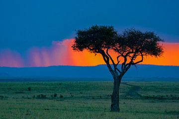 Mara zonsondergang van Peter Michel