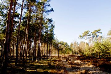 Schilderachtige blik op de Strijbeekse Heide van Fleksheks Fotografie