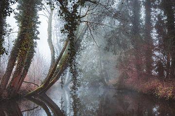 Een sprookjesachtige ochtend in Winterswijk