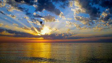Sunset sur