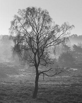 Birke im kalten Nebel von P Leydekkers - van Impelen