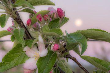 Bloesem kleurt roze van Moetwil en van Dijk - Fotografie