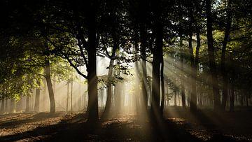 Zonnestralen in het bos von Theo Klos
