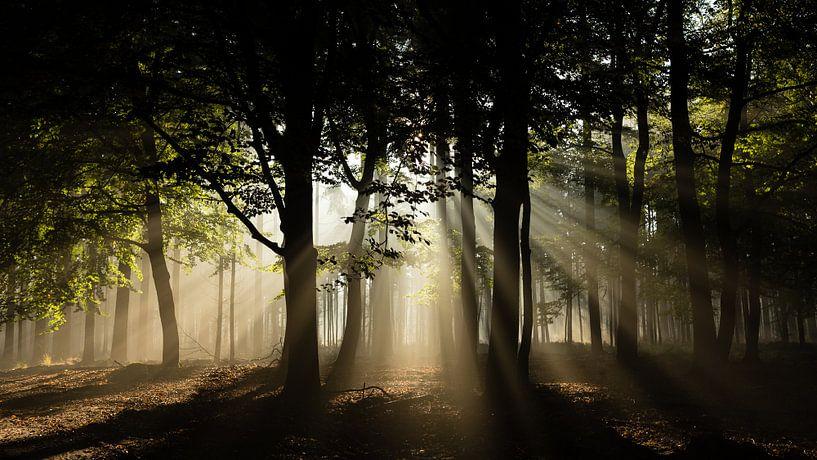 Zonnestralen in het bos van Theo Klos