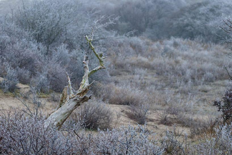 Dead tree von Menno Schaefer