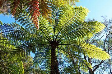 Symbole national de la Nouvelle-Zélande l'arbre de fougère argentée sur Aagje de Jong