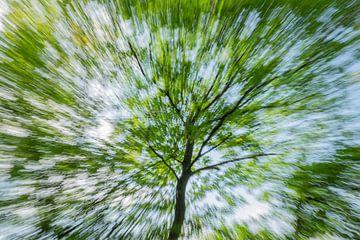 Snelle boom van Karin Tebes