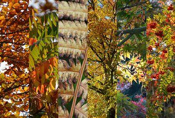 Herfstkleuren van FotoGraaG Hanneke