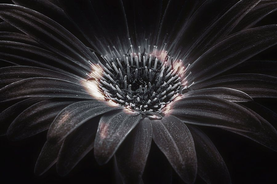 Dark flower van Joost Lagerweij