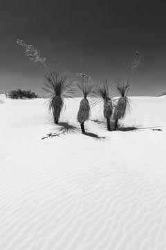 Duinen & yucca, White Sands National Monument | Monochroom van Melanie Viola
