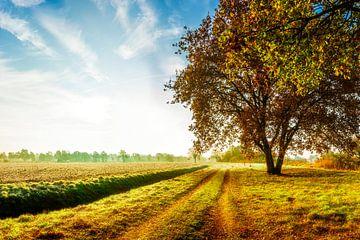 Herfstlandschap met landweggetje en eikenbomen van Günter Albers