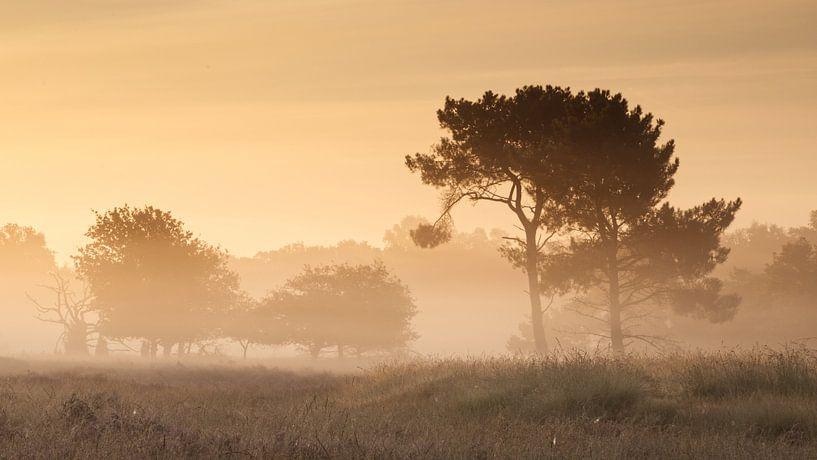 Mistige zonsopkomst van Art Wittingen