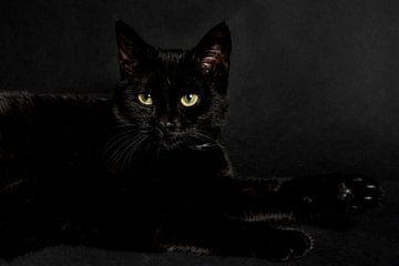 Zwarte kat op zwarte achtergrond van Barbara Koppe