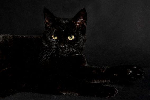 Zwarte kat op zwarte achtergrond