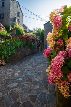 nauwe steeg met bloemen van Youri Mahieu