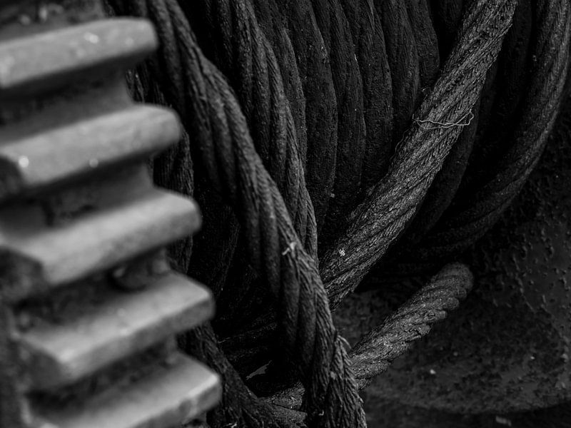 Close-up van een lier in zwart-wit van Edwin Muller