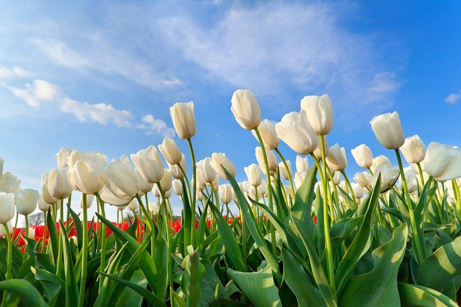 Spring beauty van Olha Rohulya
