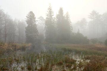 Nebel in den Wäldern der Veluwe bei Nunspeet von Jenco van Zalk