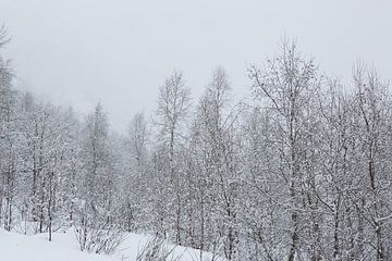 Verschneite Bäume von Coen Feron
