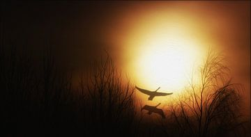 Der Sonne entgegen van