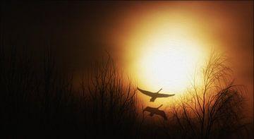 Der Sonne entgegen van Gabriele Haase