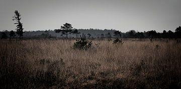 'Wooldse veen' II von Marvin Van Haasen