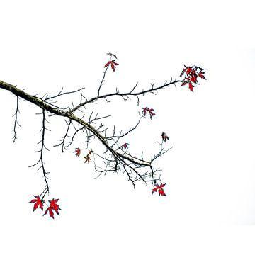 Herfstbladeren aan de boom von Rob Jansen