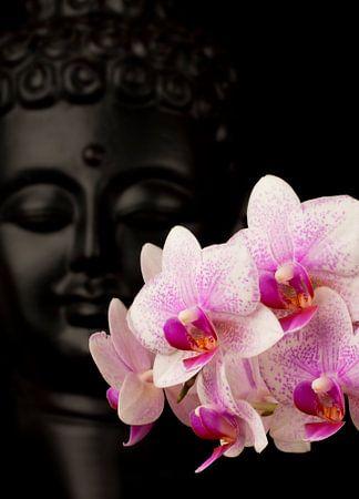 Boeddha met Orchidee