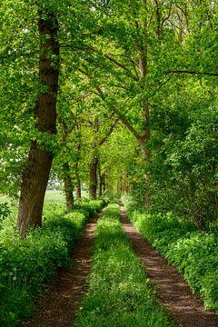 Pfad entlang eines frühlingshaften Waldes mit einer grünen Wiese im Frühling von Sjoerd van der Wal