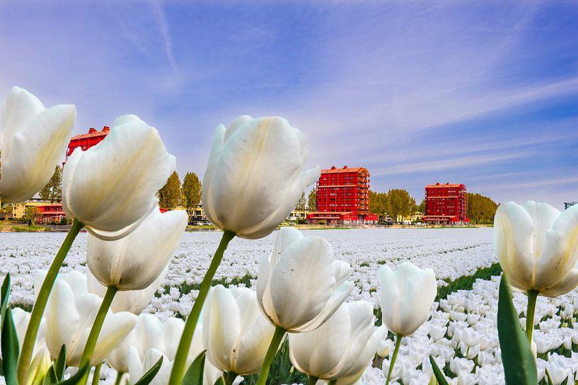 View on a city in Holland van Brian Morgan