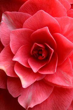Roze mandala sur Foto Facet