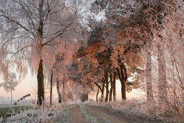 Rijp op de bomen word aangelicht door de opkomende zon